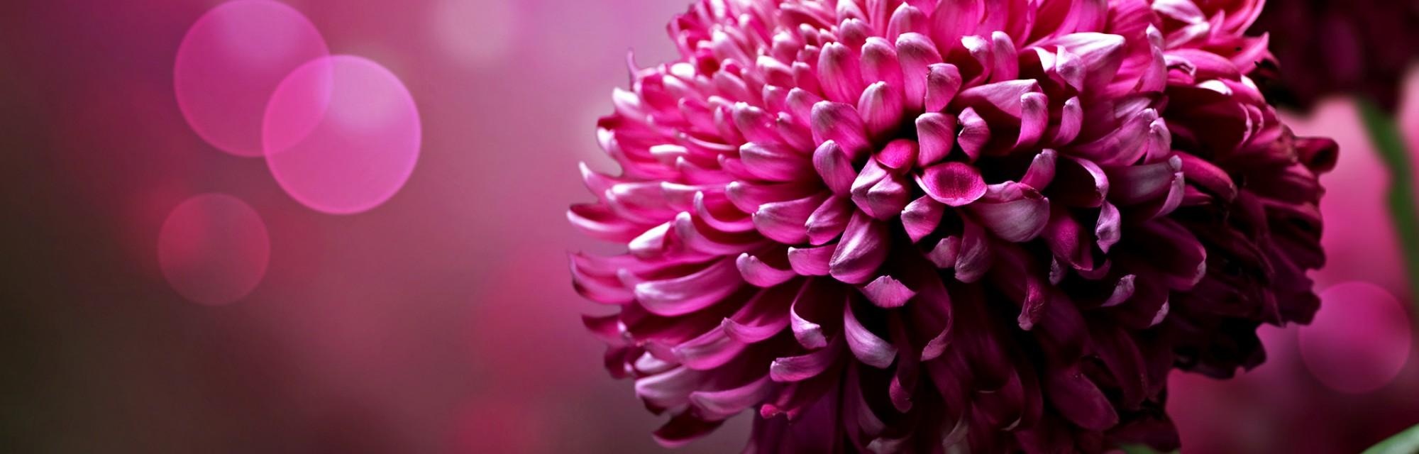 Natyra na bekoi me ngjyra, ne i sollem ato tek ju